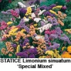 Statice, sinuatum Special Mixed