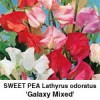 Lathyrus Galaxy Mixed