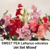 Lathyrus Jet Set Mixed