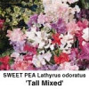 Lathyrus odoratus Tall mixed