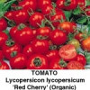 Tomat Red Cherry