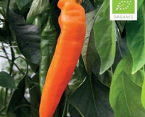 Paprika sød orange, kyra