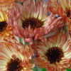 Morgenfrue Touch of Red Buff Calendula