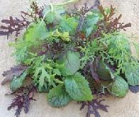 Salat Oriental Colour & Bite