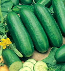 dyrkning af agurker i kapilærkasser
