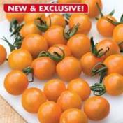 Tomat Cherry Orange Paruche F1