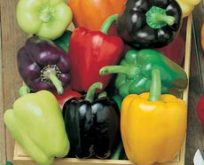 Peber capsicum Colour Spectrum