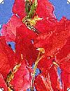 Lathyrus Rød Ærteblomst