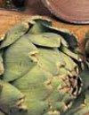 Artiskok Green Globe Delikat