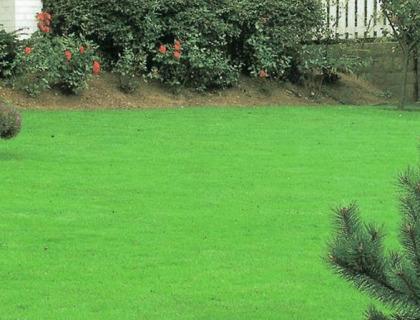 Græsfrø Extra Green 60 gram rækker til 3-4 m2