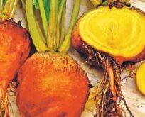Rødbede, Burpees Golden, orange med gult kød