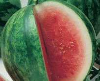 Melon Sugar Baby Vandmelon saftig og sød