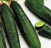 Agurk Frilands Marketmore, salatagurk, Økologisk
