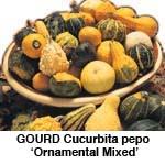 Græskar Pyntegræskar Ornamental Mix