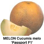 Melon Hales Best Jumbo