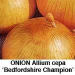 Løg. Bedfordshire Champion