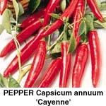 Peber Cayenne