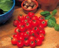Tomat Cherry Garden Pearl