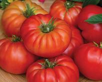 Tomat, Bountiful F1