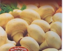 Svampemyselium, Champignon hvid, White Button 50 g