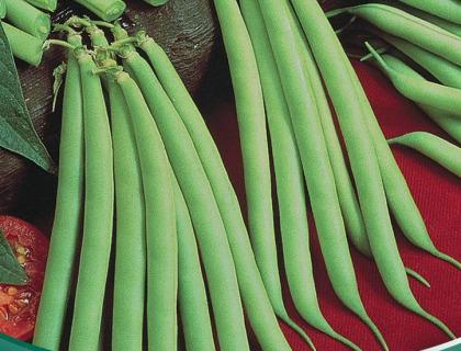 Bønne Krybbønne Provider tidlig haricot vert type
