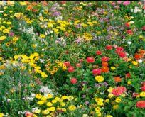 Blomsterfrøblanding til blomsterkasser