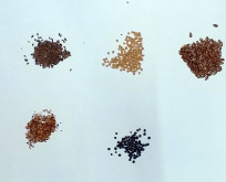 Blomsterbrak blanding Oliehør, Gul sennep, Honningurt, Rødkløver, Hvidkløver