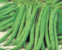 Bønne Dværgbønne, fransk haricot bønne, Tendergreen