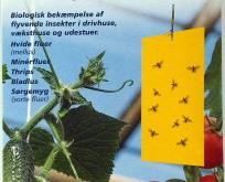 Gule limplader – mod hvide fluer, trips, sørgemyg og andre flyvende insekter