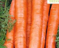 Gulerod vinter, Økologisk, Berlikum 2