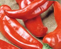 Chili Peber, Anaheim, op til 20 cm. Store frugter