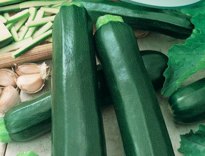 Squash, Økologisk Black Beauty, grøn Zucchini