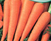 Gulerod Sommer, ekstra caroten-rig