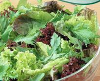 Salat Baby Leaf blanding