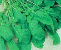 Salat, Rucola, Økologisk. Sennepssalat
