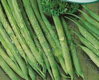 Bønne Krybbønne Processor haricot vert-type