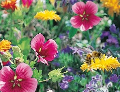 Bi Mix blomsterblanding. Fødekilde for vilde og honningbier. 10g