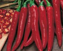 Chili, Rokita, halvstærk, god til til tørring, røde frugter