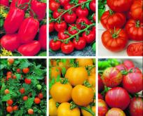 Tomat, Frø til 6 slags tomater. Intet slår hjemmedyrkede tomater