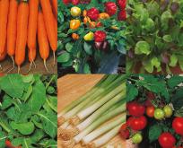Sommer grøntsager, frø samling 6 slags. Gulerod, Chili, Salat, rucola, løg, tomat
