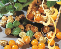 Ananaskirsebær gul orange frugter