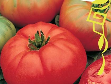 Tomat, Bøf, Marmanda