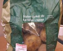 Læggekartoffel Borwina 2kg