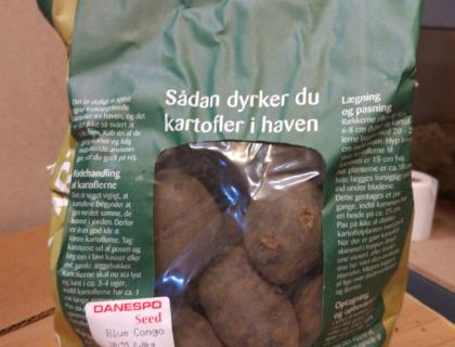 Læggekartoffel Blå Congo, Tidlig, Salat