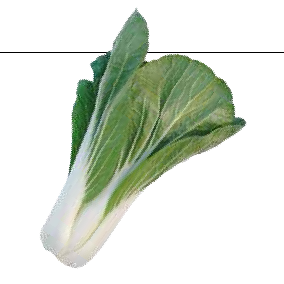 Pak choi, Salat, Bopak F1