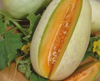 Melon Melba frø