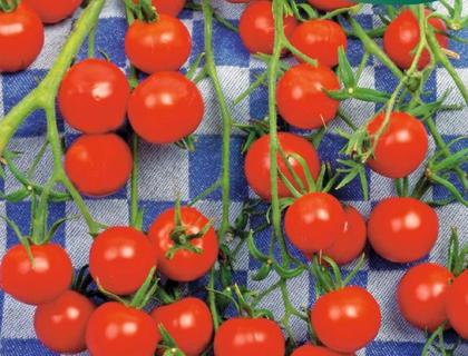 Tomat Gardens Delight