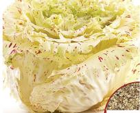 Salat cikorie di castelfranco
