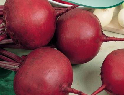Rødbede Økologisk frø Rote Kugel 2 rund
