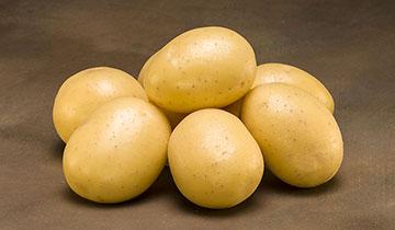Læggekartoffel Maya 2 kg, Tidlig, pillet eller skrallet
